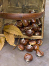 Basket of chestnuts Stock Photo