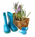 Basket with crocuses and gumboots on a white background it is isolated Royalty Free Stock Photo