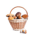 Basket with different mushrooms from forest closeup on white background Stock Photography