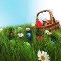 Basket of easter eggs on green grass and flowers Stock Image