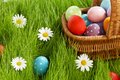 Basket of easter eggs on green grass and flowers Stock Images
