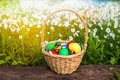 Basket of easter eggs on meadow in green spring grass, Closeup