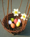 Basket with easter eggs and narcissus Royalty Free Stock Image
