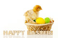 Basket with the Easter eggs and small chicken Royalty Free Stock Photos