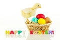Basket with the Easter eggs and small chicken Royalty Free Stock Photography