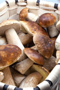 Basket with eatable mushrooms Stock Photography