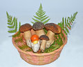 Basket with edible mushrooms Stock Photos