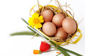 Basket with eggs and straw a of on a white background wildflowers Royalty Free Stock Images