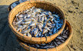 Basket of fish at danang beach in the morning Stock Images