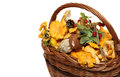Basket of forest mushrooms and berries isolated on Royalty Free Stock Photo