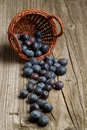 Basket with fresh blueberry Royalty Free Stock Photos