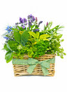 Basket of fresh herbs decorative bouquet with a variety including thyme sage rosemary lavender dill chervil and basil Royalty Free Stock Photo