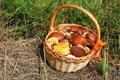 Basket of fresh mushrooms picked in forest delicious the Royalty Free Stock Photos