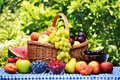 Basket with fresh organic fruits in the garden Stock Images