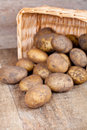 Basket with fresh potatoes Stock Photo