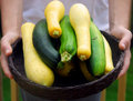 Basket of Fresh Squash Stock Images