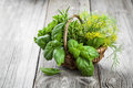 Basket of freshly picked herbs including basil rosemary dill a and parsley on wooden background Royalty Free Stock Photography
