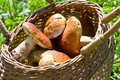 Basket full of boletus edulis Royalty Free Stock Photos