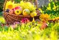 Basket full fruits grass sunset light Royalty Free Stock Photo