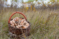 a basket full of mushrooms standing in grass Royalty Free Stock Photo
