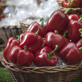 basket full of peppers for sale on a Borough market stall stand Royalty Free Stock Photo
