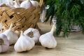 Basket of garlic Royalty Free Stock Images