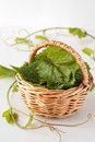 Basket with grape leaves fresh for dolma Royalty Free Stock Photo