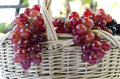 Basket of grapes and vine Royalty Free Stock Photography