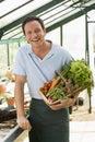 Basket greenhouse holding man vegetables Στοκ εικόνες με δικαίωμα ελεύθερης χρήσης