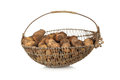 Basket of harvested organic potatoes Royalty Free Stock Photo
