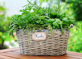 Basket with herbs in the garden Stock Photography