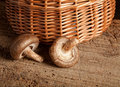 Basket and mushrooms Stock Photography