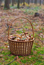 Basket with mushrooms in the forest Royalty Free Stock Image