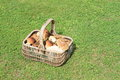 Basket of mushrooms wicker full lots kinds lying on green grass Stock Image
