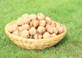 Basket with nuts strawy full of standing on green grass Royalty Free Stock Images