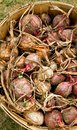 Basket of onions Royalty Free Stock Photos