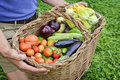 Basket of organic vegetables Royalty Free Stock Photo