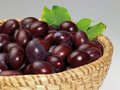 Basket plums grey back Stock Images