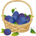 Basket with plums isolated on white background Royalty Free Stock Image