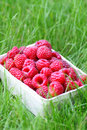 Basket of raspberries Stock Image