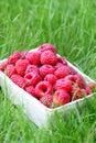 Basket of raspberries Royalty Free Stock Photo