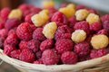 Basket of raspberries Royalty Free Stock Photo
