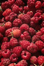 Basket of raspberries rubus idaeus background wild Royalty Free Stock Photos