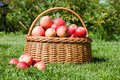 Basket with red apples costs Royalty Free Stock Photos