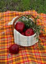 Basket with red apples and green twigs Royalty Free Stock Photography