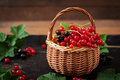 Basket with Red and Black currant with leaves. Royalty Free Stock Photo