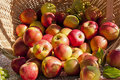 Basket of red and gold apples Stock Image