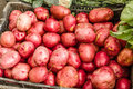 Basket of red potatoes at the market Royalty Free Stock Photo
