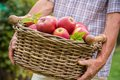 Basket of ripe apples Royalty Free Stock Images