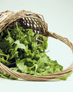 Basket of rocket Royalty Free Stock Images